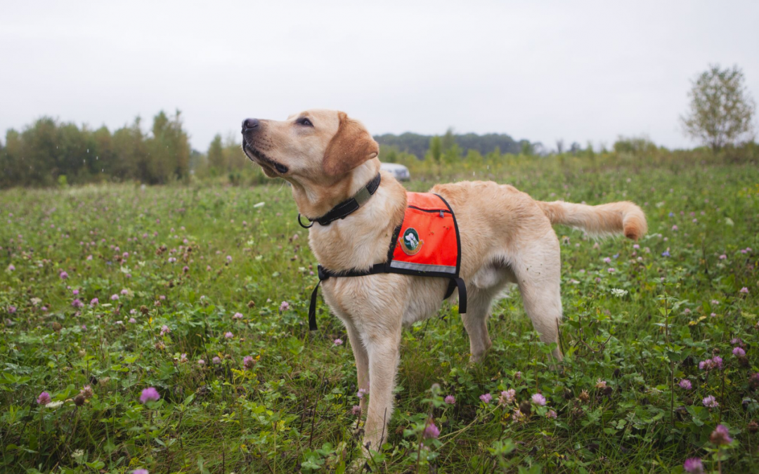 Guest Post: Detection Dogs Advancing Conservation Efforts